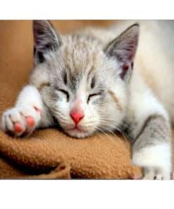 tapis de souris motif chat qui dort