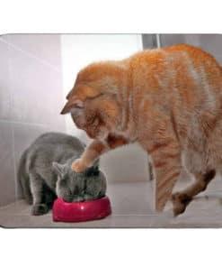 Tapis de souris motif chat turbulent