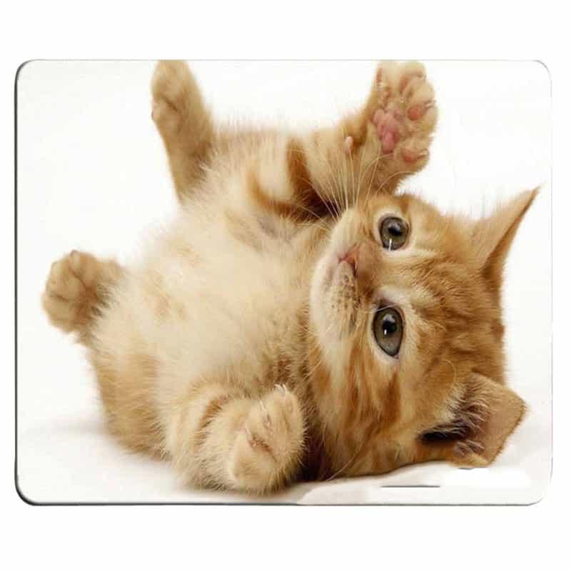 support sous main chaton qui s'amuse sur le dos