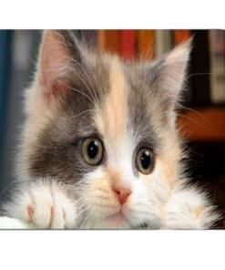 tapis de souris motif chaton aux yeux marrons qui observe