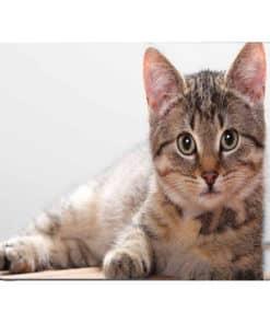 tapis de souris motif chat allongé