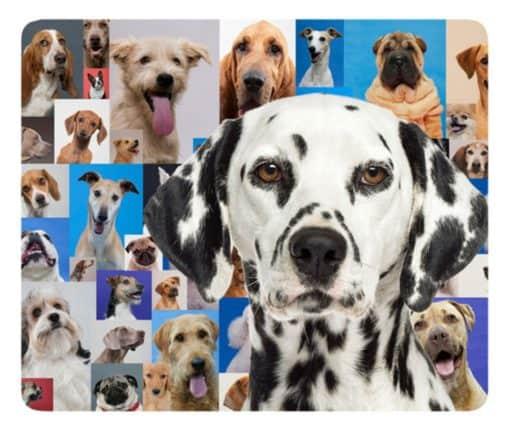 Tapis de souris chiot dalmatien sur mosaïque de chiens
